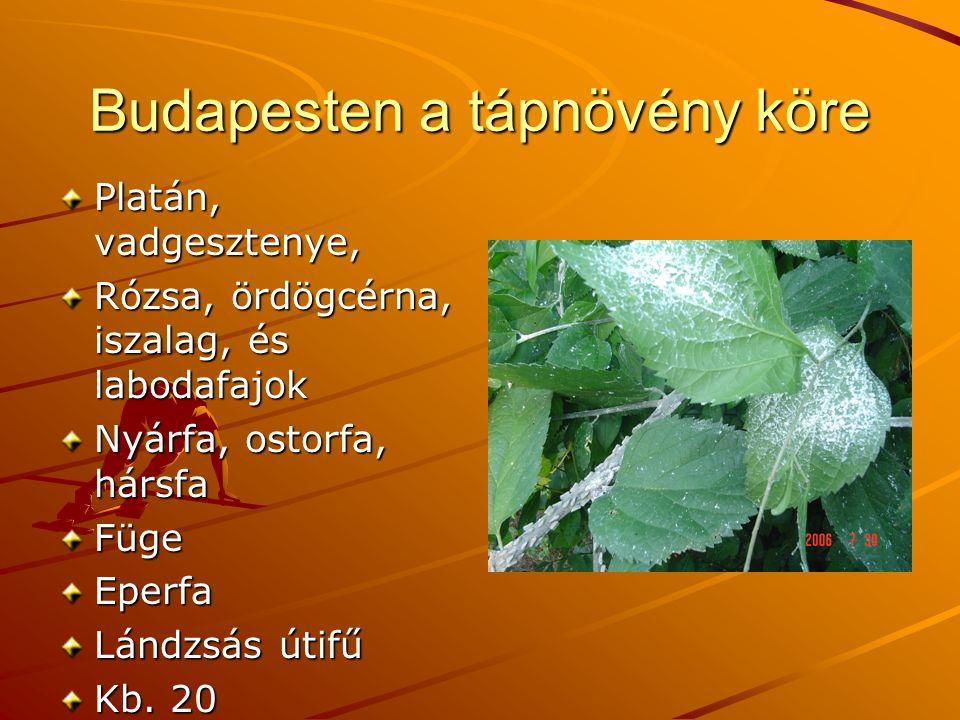 Budapesten a tápnövény köre