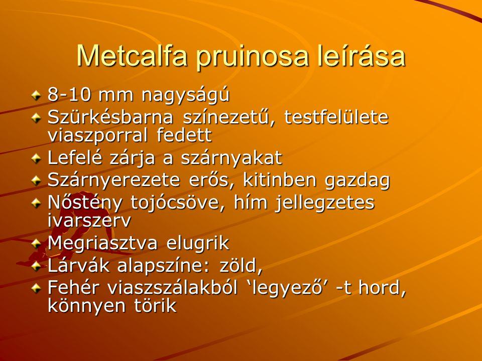 Metcalfa pruinosa leírása