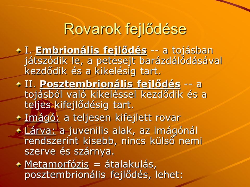 Rovarok fejlődése I. Embrionális fejlődés -- a tojásban játszódik le, a petesejt barázdálódásával kezdődik és a kikelésig tart.