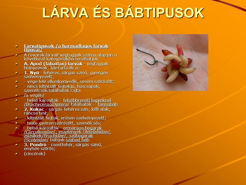 LÁRVA ÉS BÁBTIPUSOK Lárvatípusok /a harmadlagos lárvák típusai/