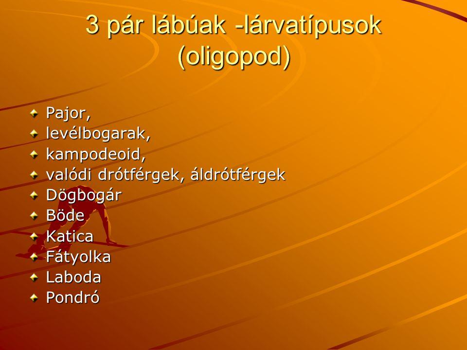 3 pár lábúak -lárvatípusok (oligopod)