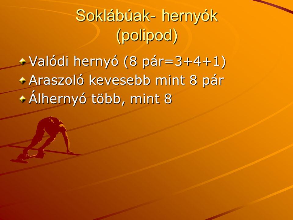 Soklábúak- hernyók (polipod)