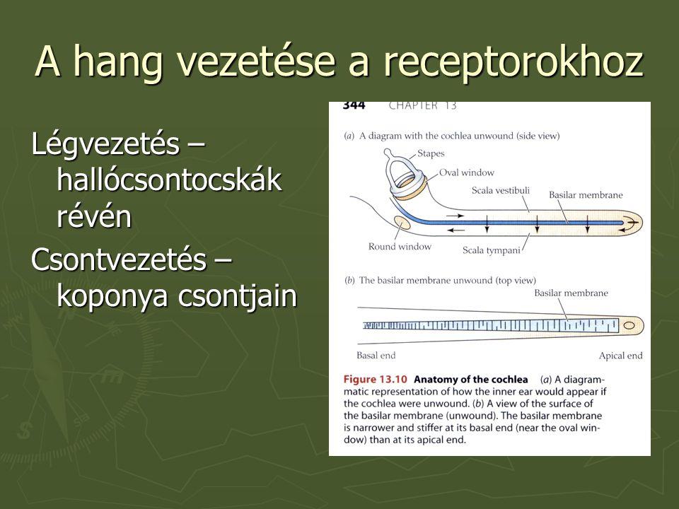 A hang vezetése a receptorokhoz