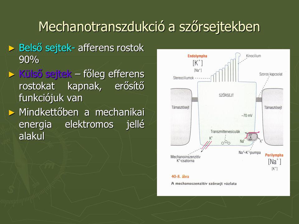 Mechanotranszdukció a szőrsejtekben