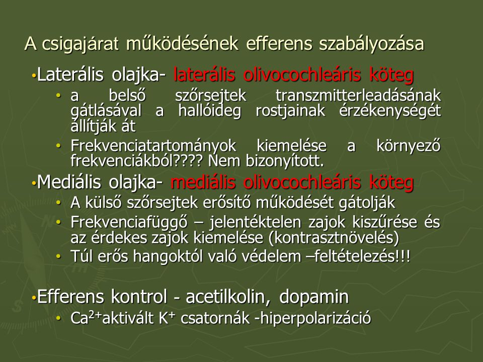 A csigajárat működésének efferens szabályozása