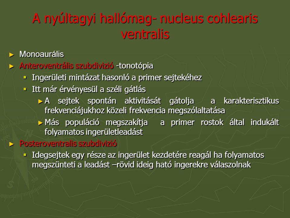 A nyúltagyi hallómag- nucleus cohlearis ventralis