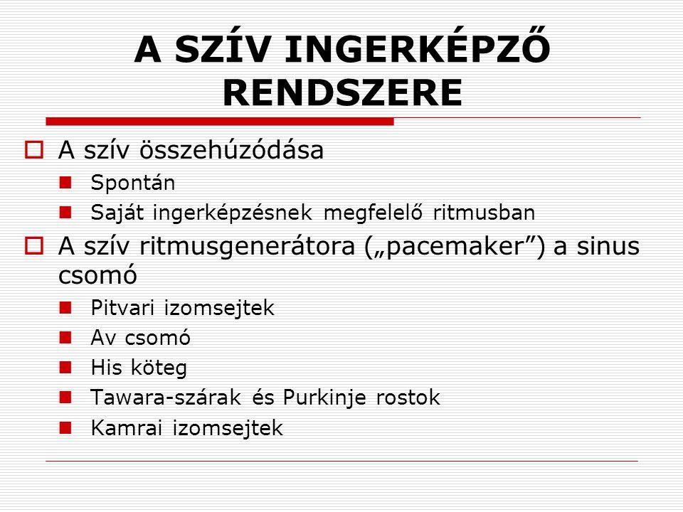 A SZÍV INGERKÉPZŐ RENDSZERE