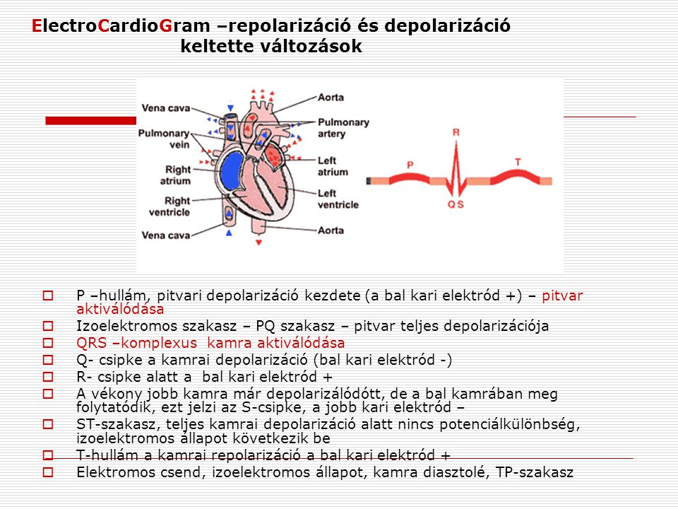 ElectroCardioGram –repolarizáció és depolarizáció keltette változások