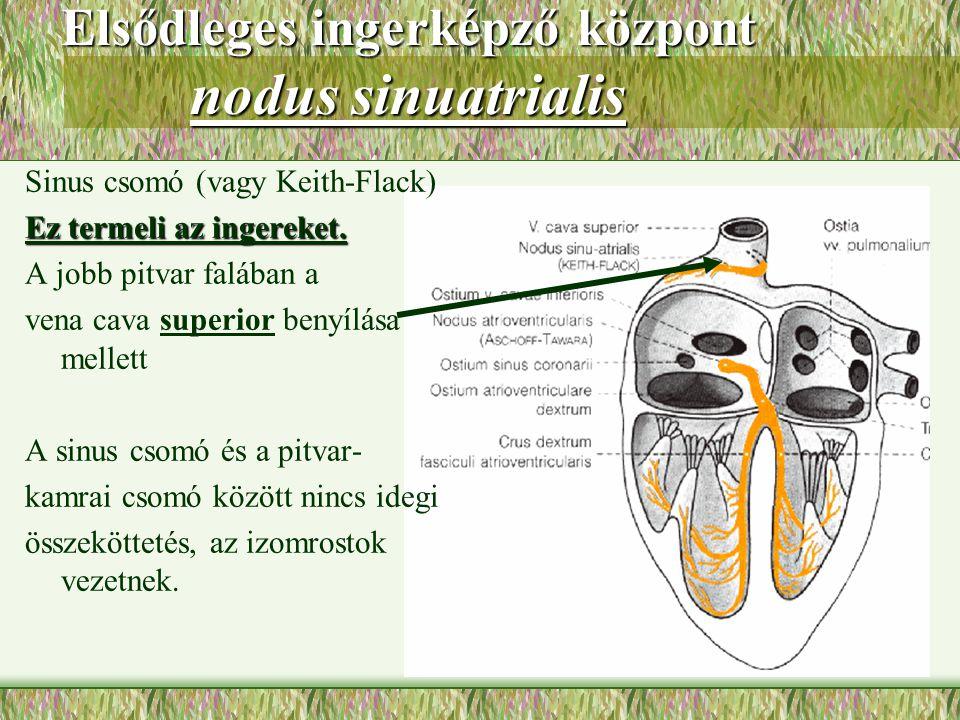 Elsődleges ingerképző központ nodus sinuatrialis