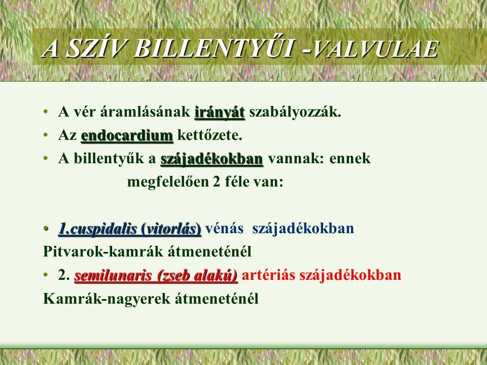 A SZÍV BILLENTYŰI -VALVULAE