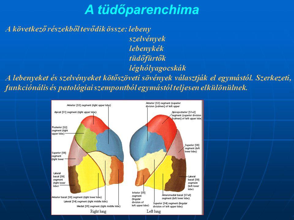 A tüdőparenchima A következő részekből tevődik össze: lebeny