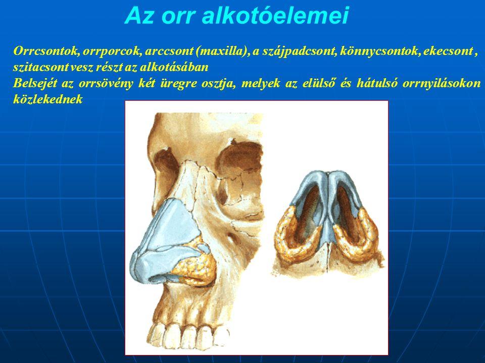 Az orr alkotóelemei Orrcsontok, orrporcok, arccsont (maxilla), a szájpadcsont, könnycsontok, ekecsont ,