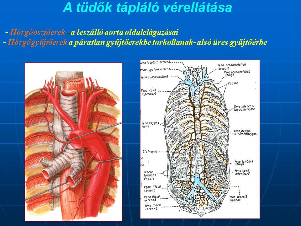 A tüdők tápláló vérellátása