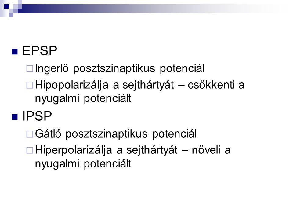 EPSP IPSP Ingerlő posztszinaptikus potenciál