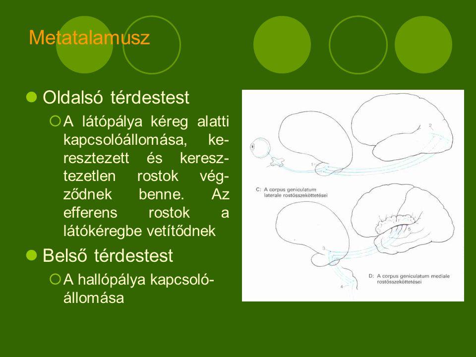 Metatalamusz Oldalsó térdestest Belső térdestest