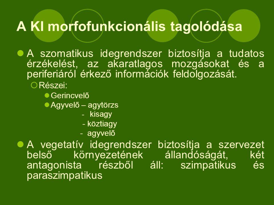 A KI morfofunkcionális tagolódása