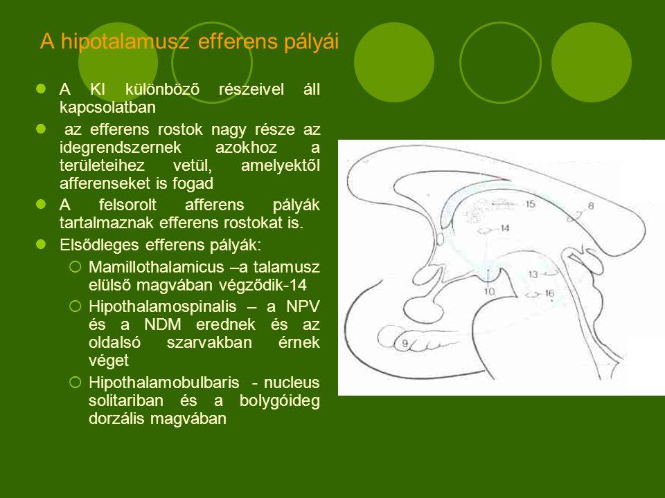 A hipotalamusz efferens pályái