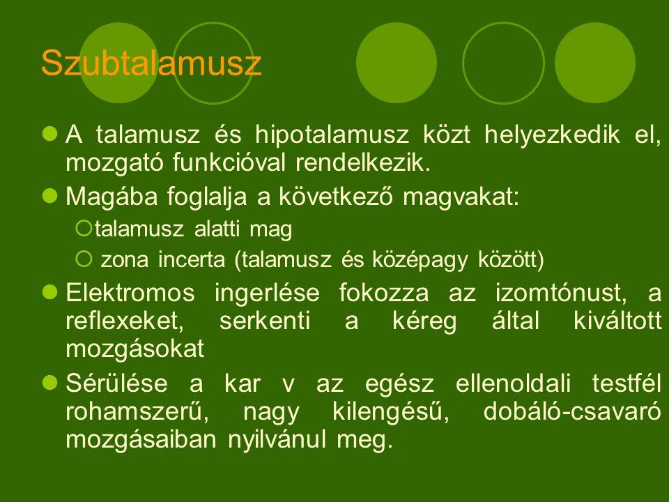 Szubtalamusz A talamusz és hipotalamusz közt helyezkedik el, mozgató funkcióval rendelkezik. Magába foglalja a következő magvakat: