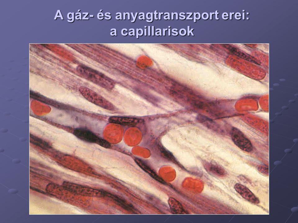A gáz- és anyagtranszport erei: a capillarisok