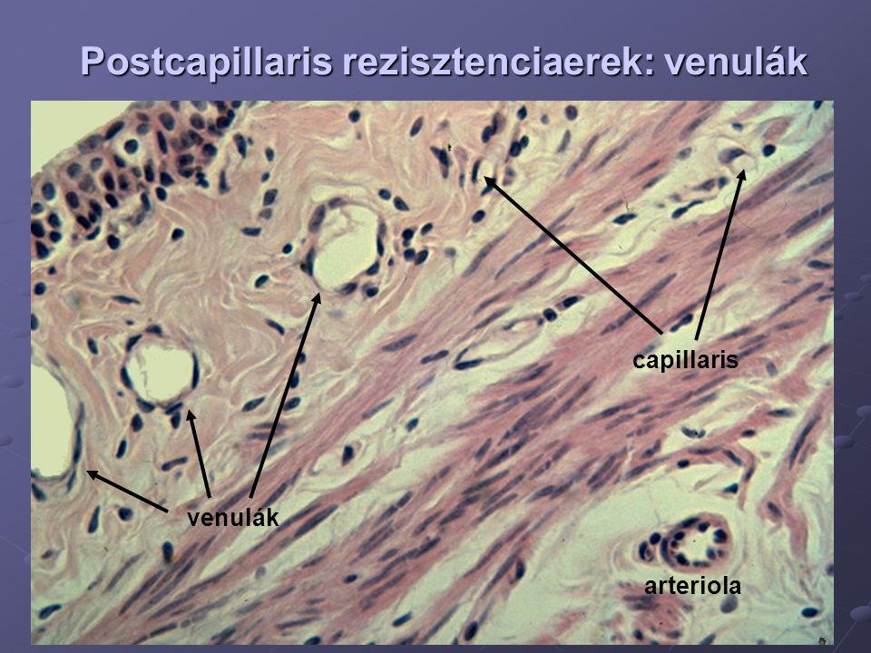 Postcapillaris rezisztenciaerek: venulák