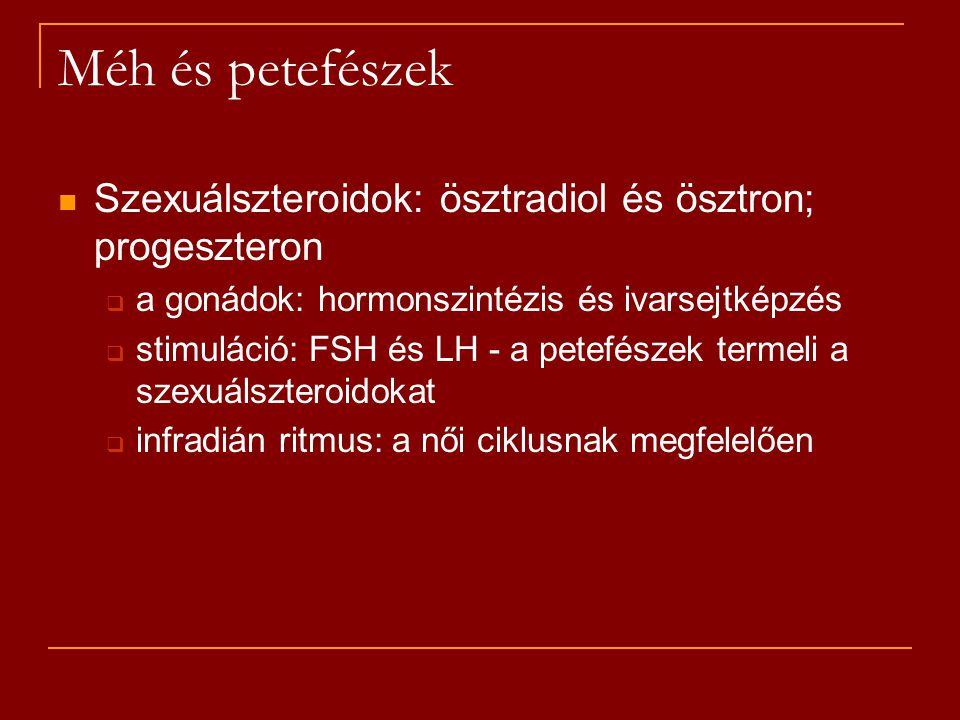 Méh és petefészek Szexuálszteroidok: ösztradiol és ösztron; progeszteron. a gonádok: hormonszintézis és ivarsejtképzés.