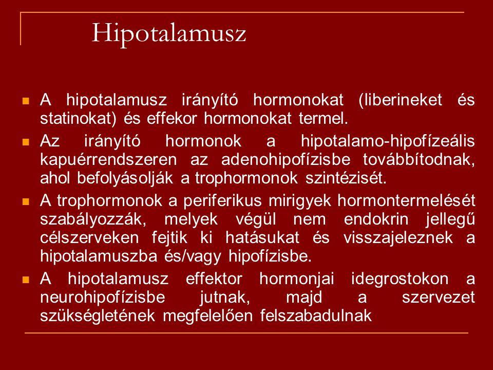 Hipotalamusz A hipotalamusz irányító hormonokat (liberineket és statinokat) és effekor hormonokat termel.