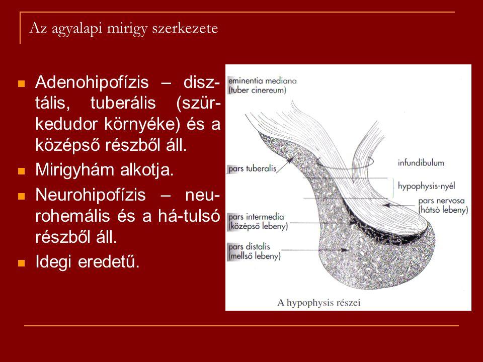 Az agyalapi mirigy szerkezete