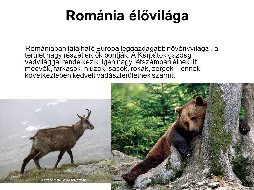 Románia élővilága