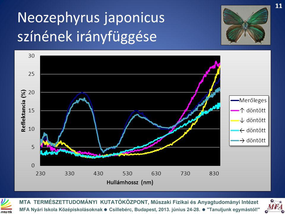 Neozephyrus japonicus színének irányfüggése