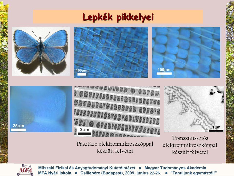 Lepkék pikkelyei Transzmissziós elektronmikroszkóppal készült felvétel
