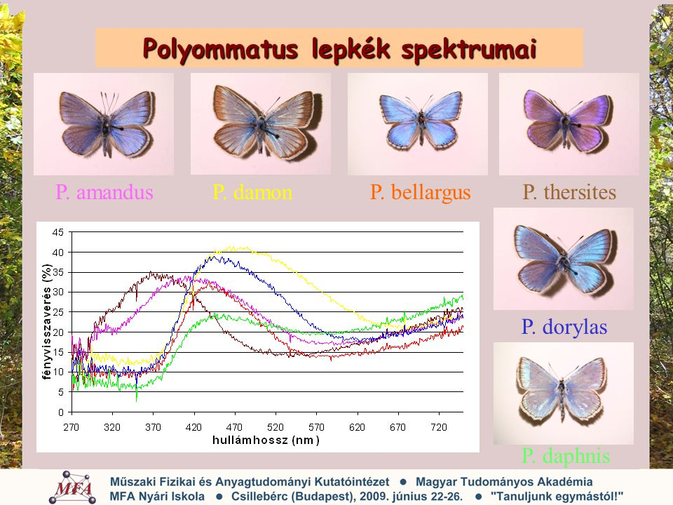 Polyommatus lepkék spektrumai