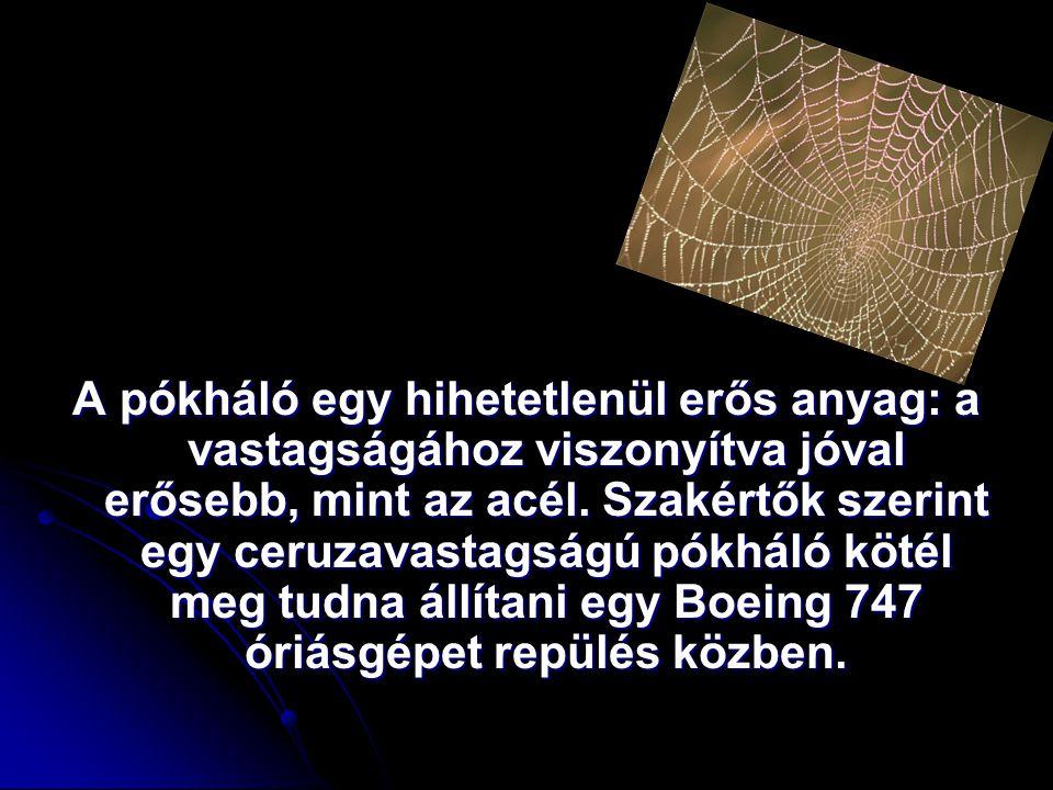 A pókháló egy hihetetlenül erős anyag: a vastagságához viszonyítva jóval erősebb, mint az acél.