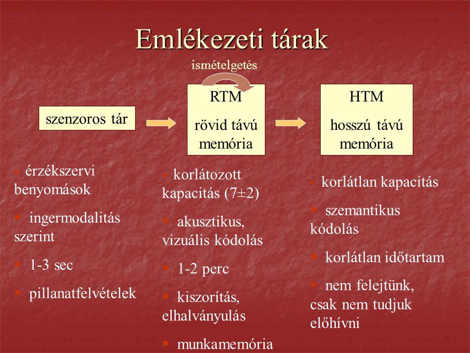Emlékezeti tárak RTM rövid távú memória HTM hosszú távú memória
