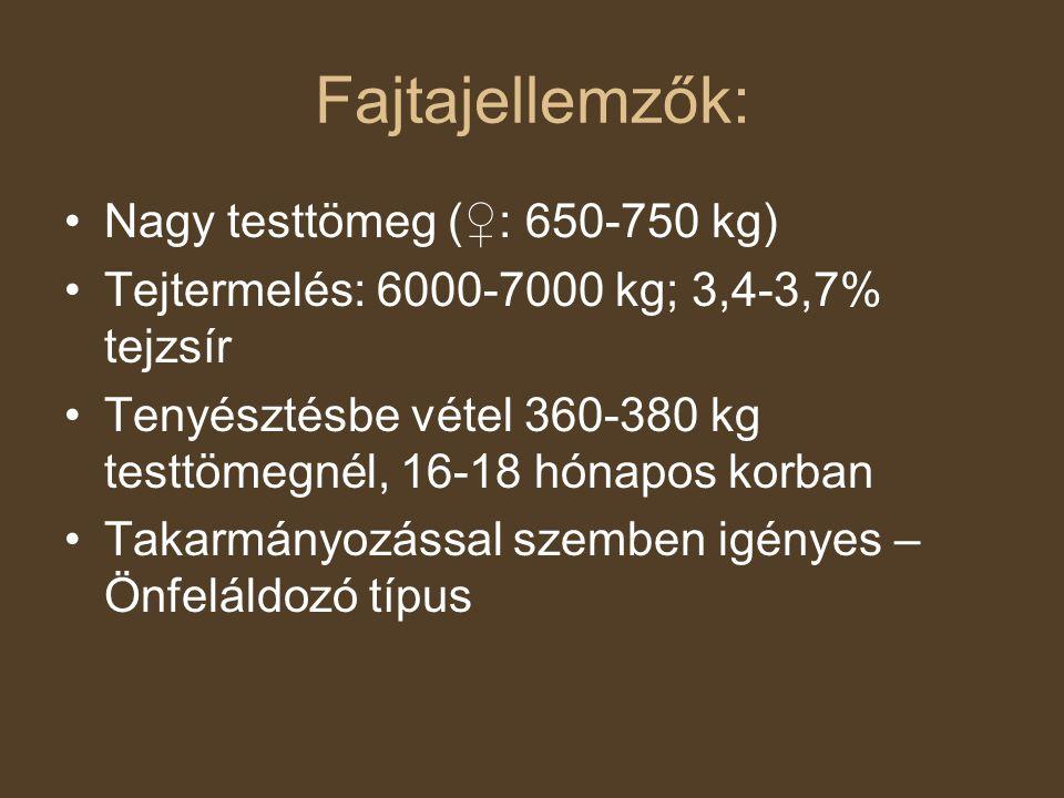 Fajtajellemzők: Nagy testtömeg (♀: 650-750 kg)