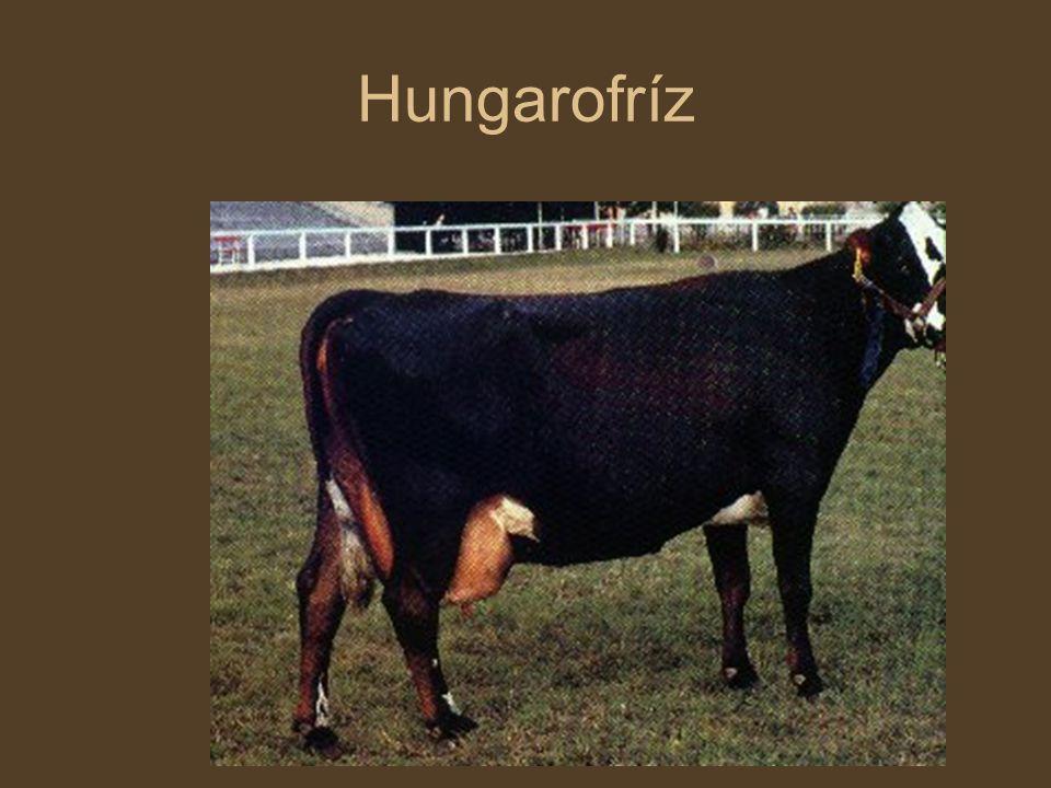 Hungarofríz