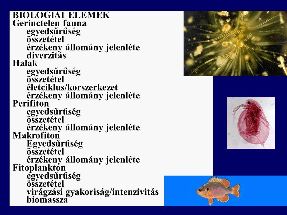 BIOLÓGIAI ELEMEK Gerinctelen fauna. egyedsűrűség. összetétel. érzékeny állomány jelenléte. diverzitás.