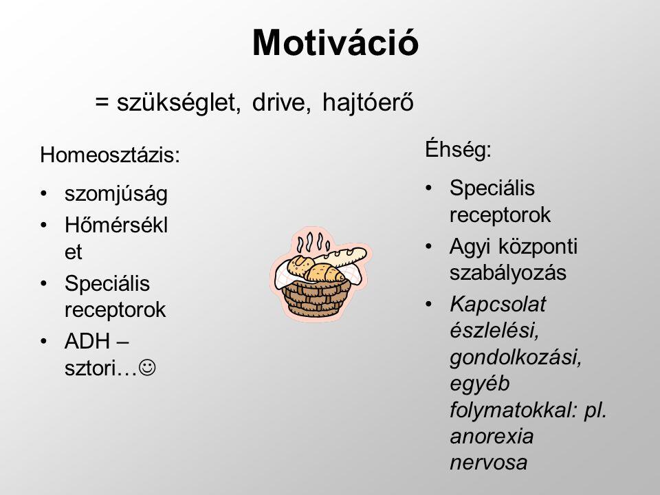 Motiváció = szükséglet, drive, hajtóerő Éhség: Homeosztázis: