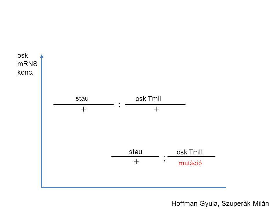 ; + + ; + osk mRNS konc. stau osk TmII stau osk TmII mutáció