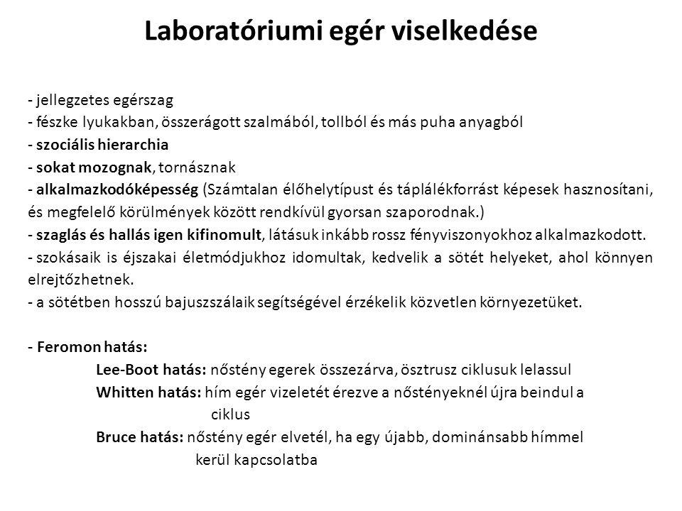 Laboratóriumi egér viselkedése
