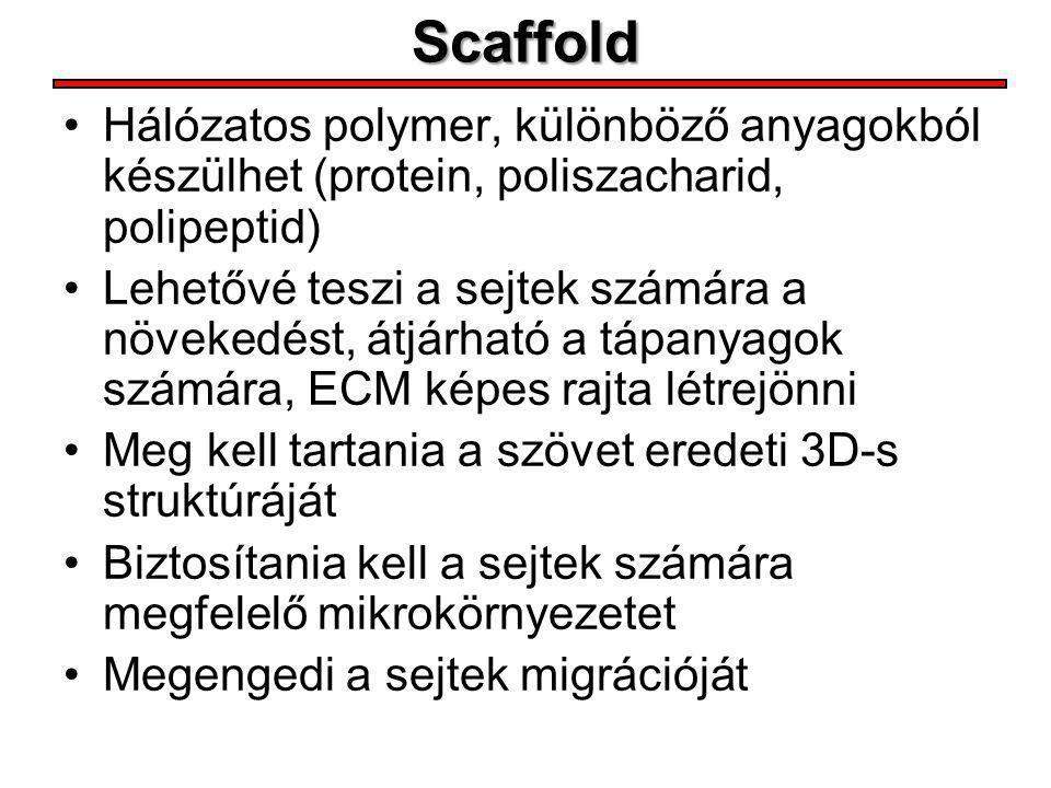 Scaffold Hálózatos polymer, különböző anyagokból készülhet (protein, poliszacharid, polipeptid)