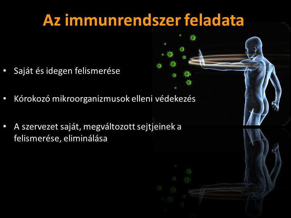 Az immunrendszer feladata