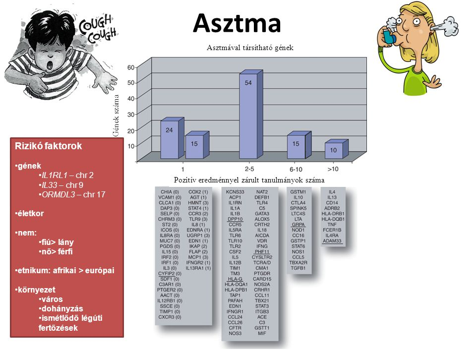 Asztma Rizikó faktorok Asztmával társítható gének Gének száma gének