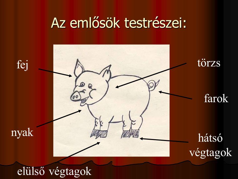 Az emlősök testrészei: