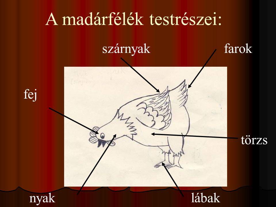 A madárfélék testrészei: