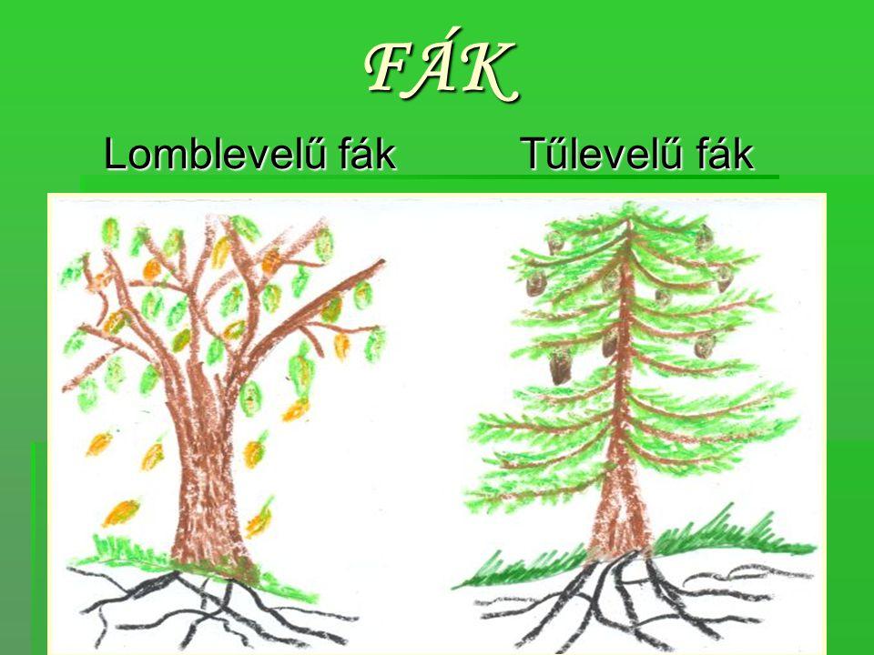 FÁK Lomblevelű fák Tűlevelű fák