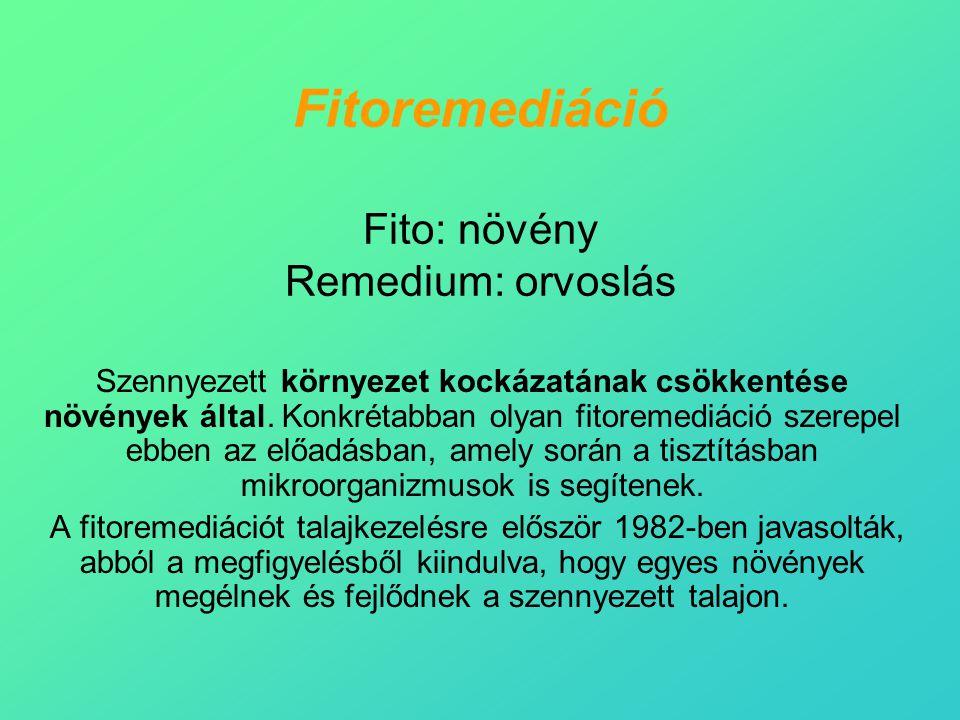 Fitoremediáció Fito: növény Remedium: orvoslás