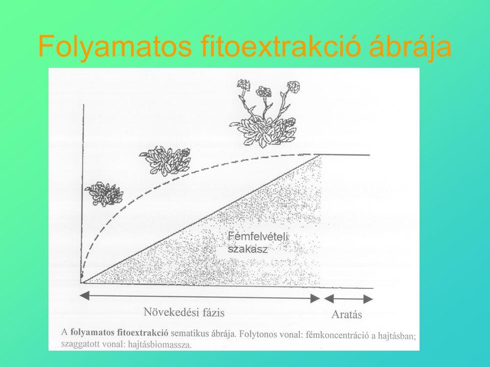 Folyamatos fitoextrakció ábrája
