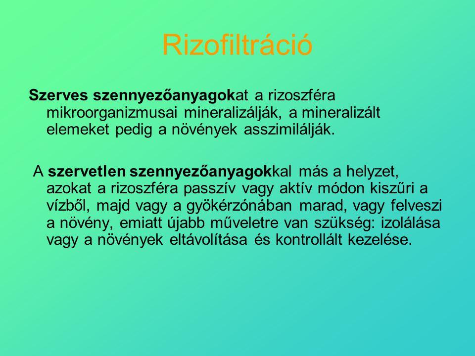 Rizofiltráció Szerves szennyezőanyagokat a rizoszféra mikroorganizmusai mineralizálják, a mineralizált elemeket pedig a növények asszimilálják.