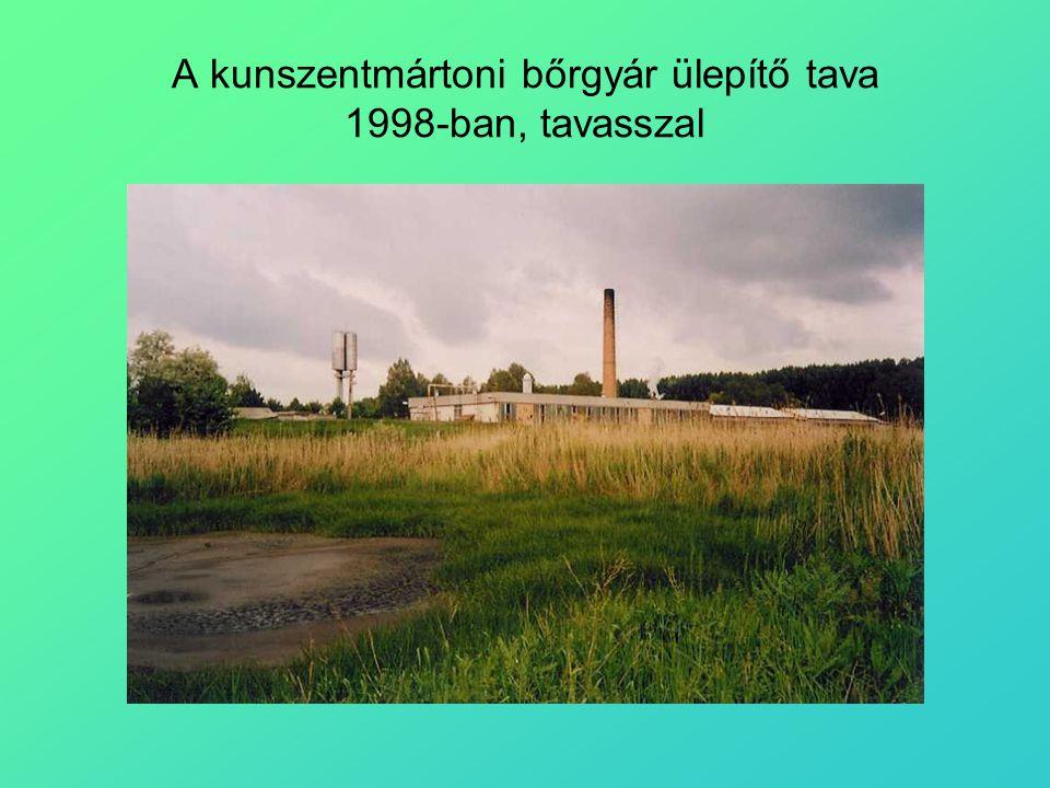 A kunszentmártoni bőrgyár ülepítő tava 1998-ban, tavasszal