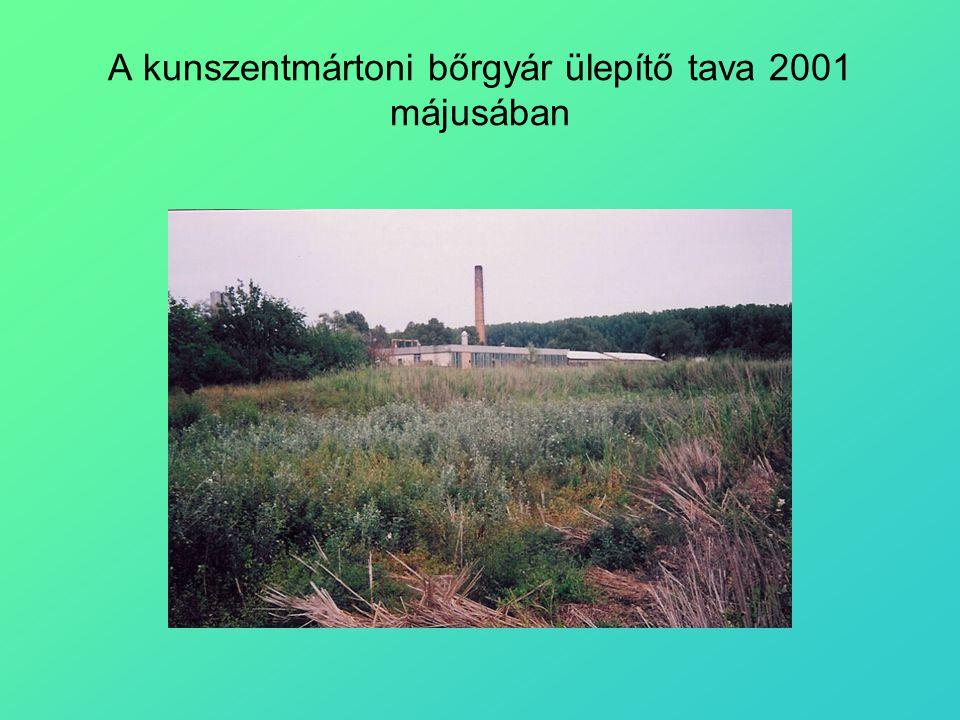 A kunszentmártoni bőrgyár ülepítő tava 2001 májusában